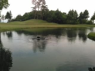 ゴルフ場の水環境を取り巻く問題点とは?