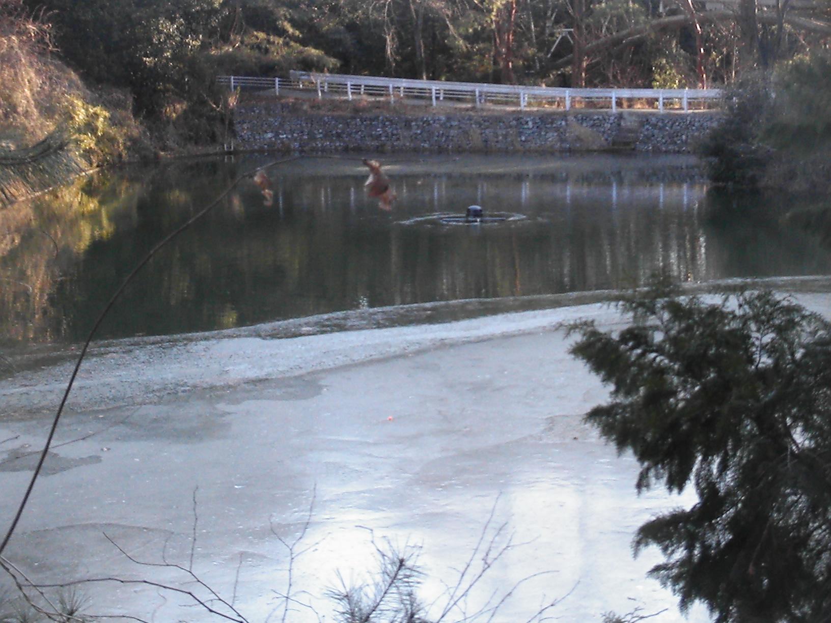 冬場の池の結氷対策にリプルが活躍しています!