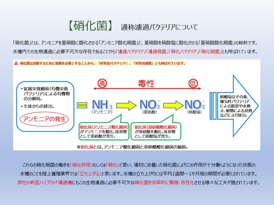 濾過槽内の硝化作用について(基礎知識)
